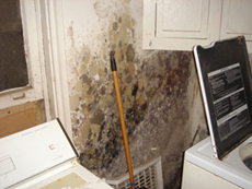 Mold Remediation in Northern Virginia