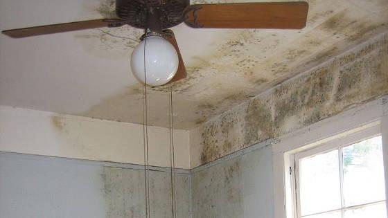 Mold in Home Fairfax, VA