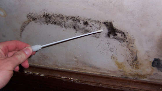 Signs Of Black Mold In Fairfax Va Testing