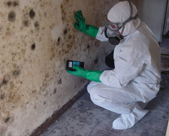 Mold Treatment in Reston, VA